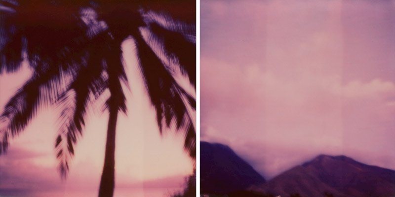 impossible project sx70 polaroid of maui palm trees