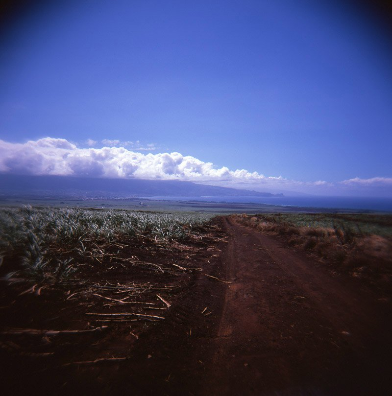 maui sugar cane field holga 120
