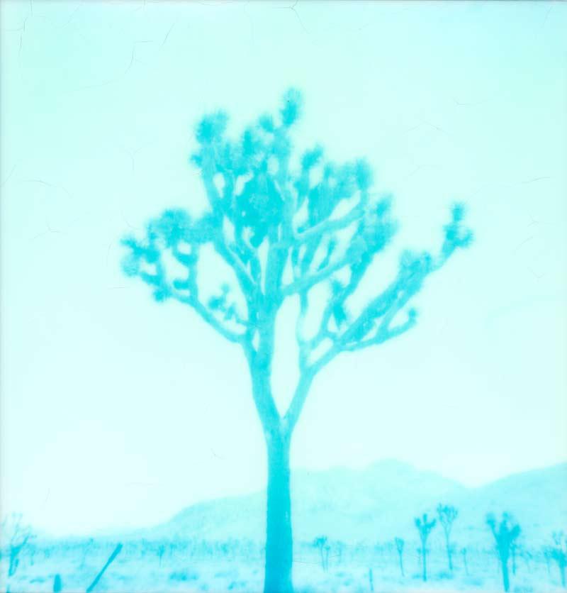 Joshua Tree Polaroid