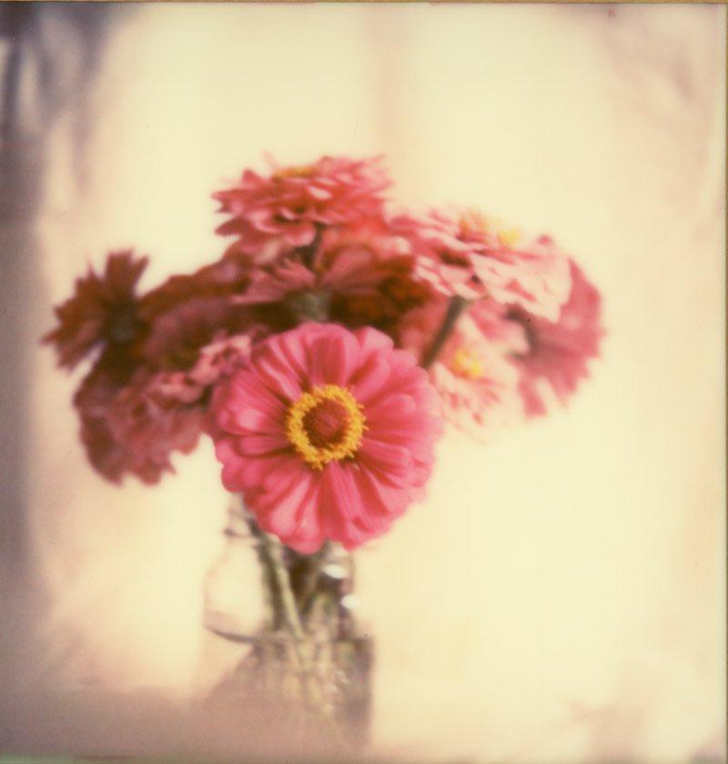 Polaroid of Flowers