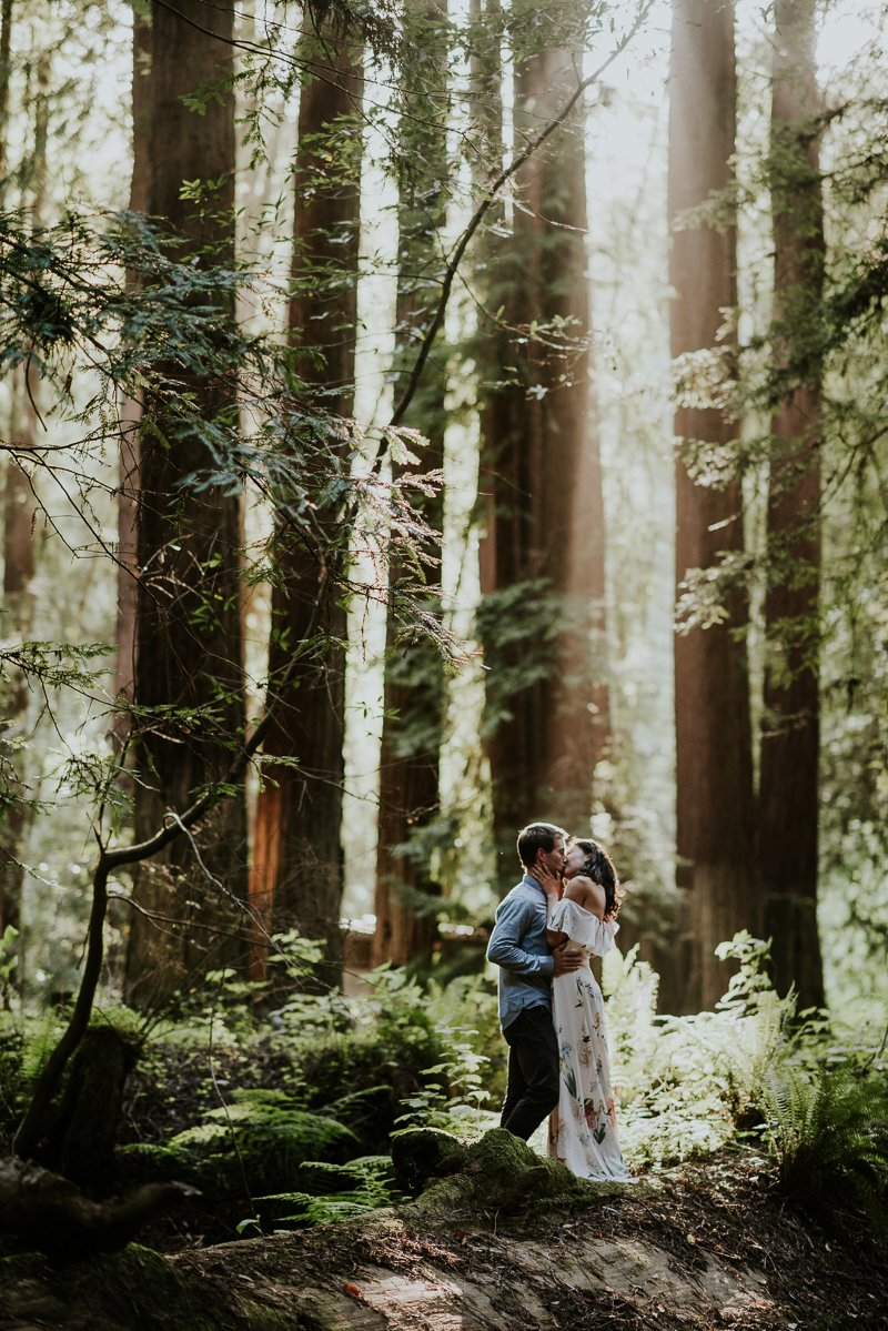 Redwood Engagement photos in Mendocino